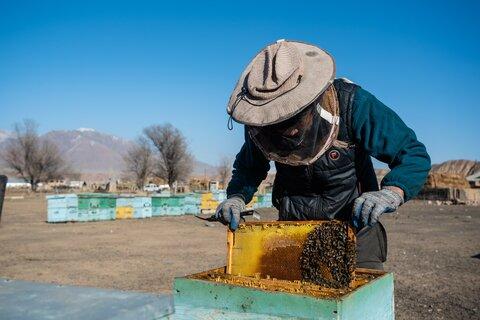 Быть пчеловодом